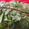Swiss Chard And Spinach